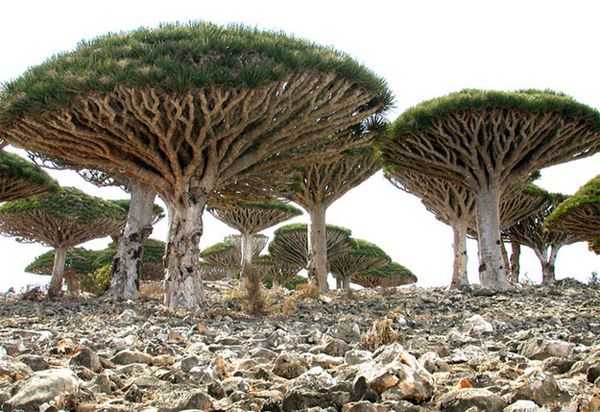 SocotraYemen